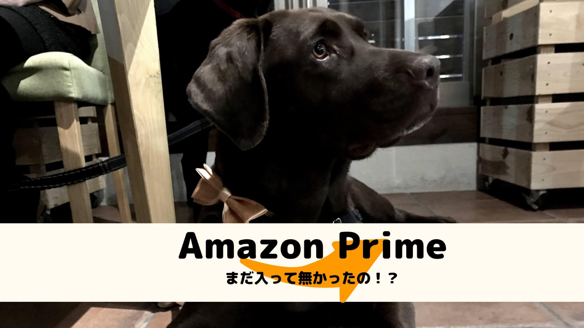 Amazon Prime まだ入って無かったの!? ラブラドールレトリバー