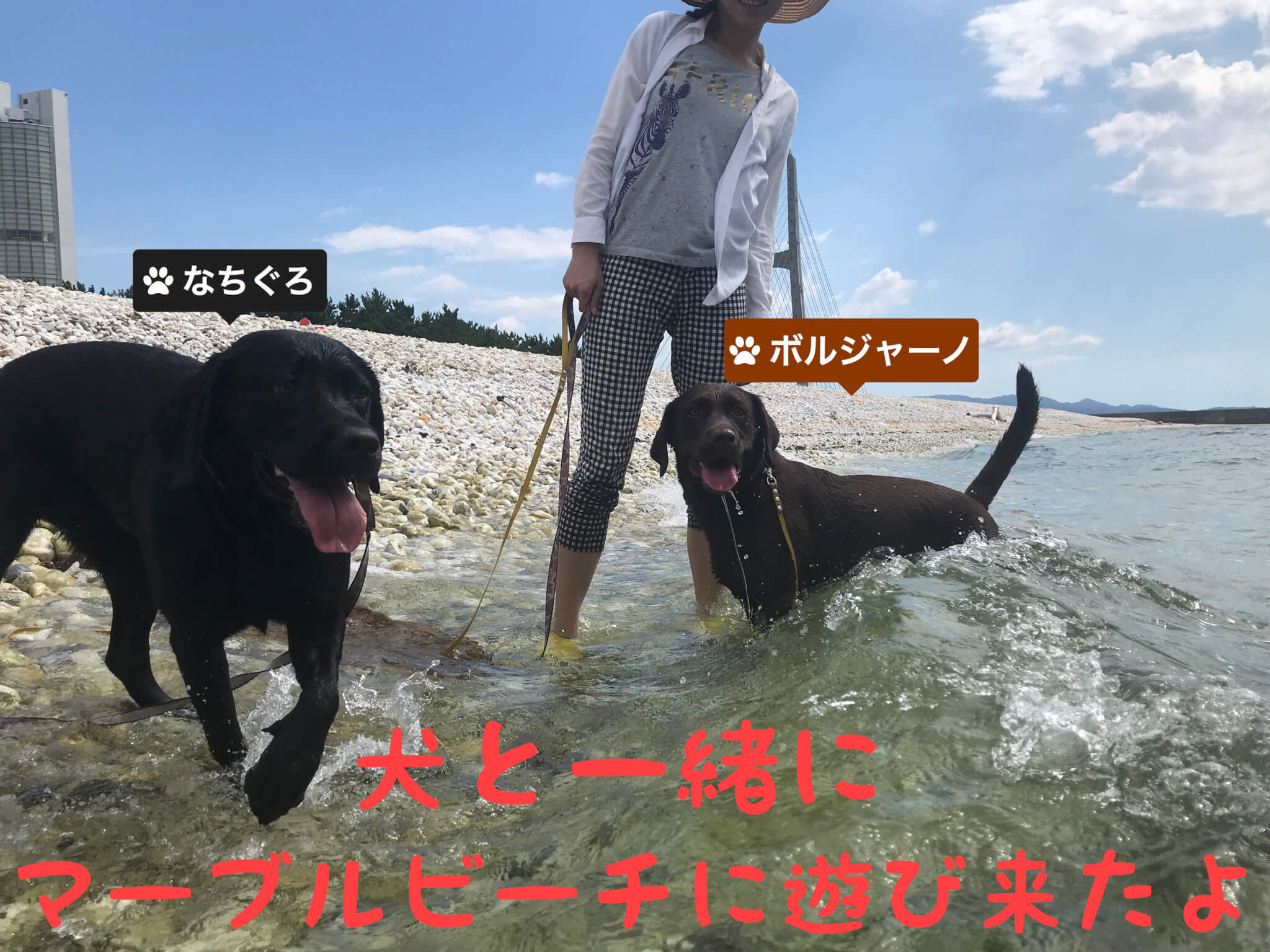 犬と一緒にマーブルビーチに遊びに来たよ なちぐろ ボルジャーノ ラブラドールレトリバー