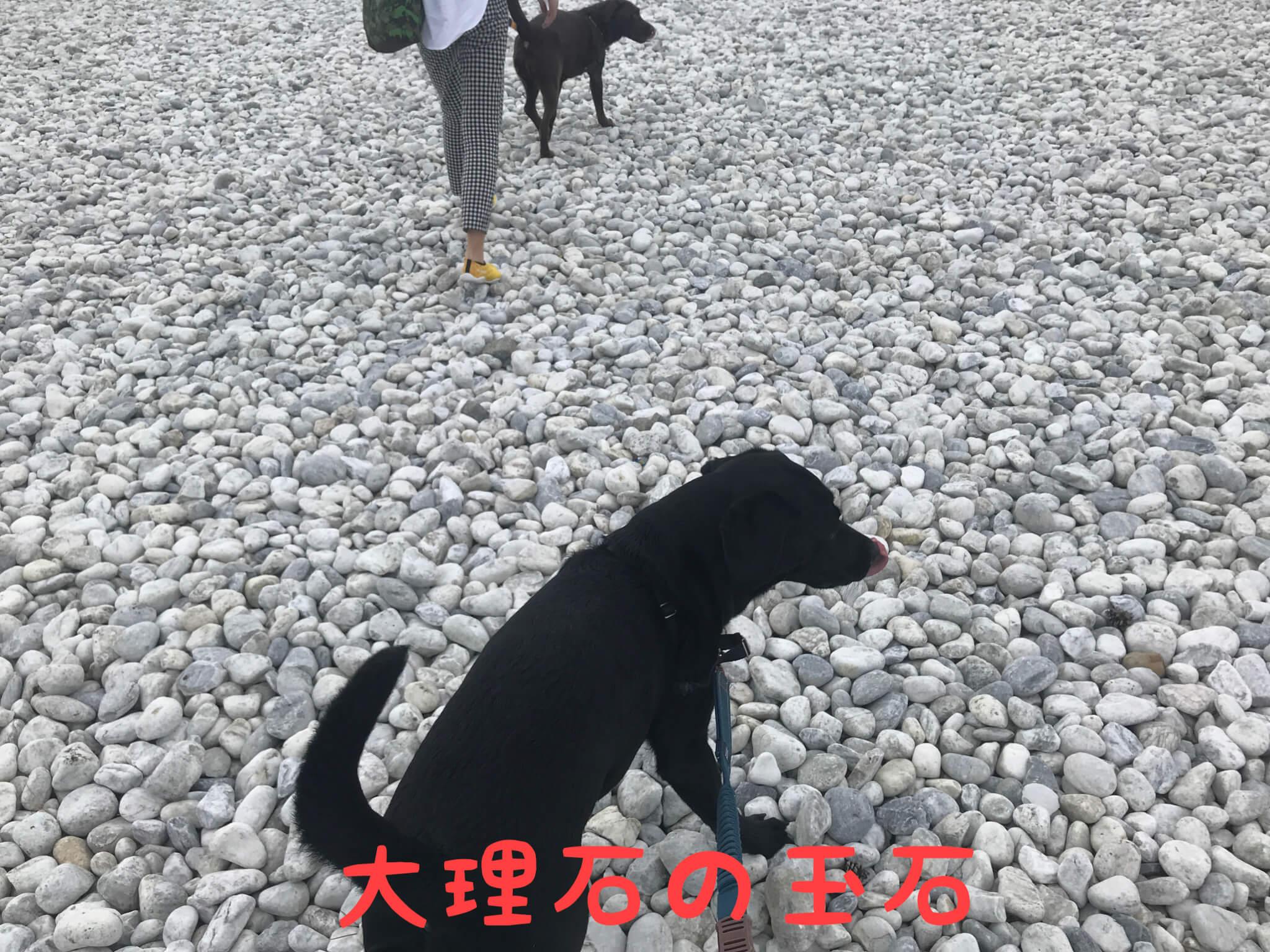 大理石の玉石 マーブルビーチ ラブラドールレトリバー