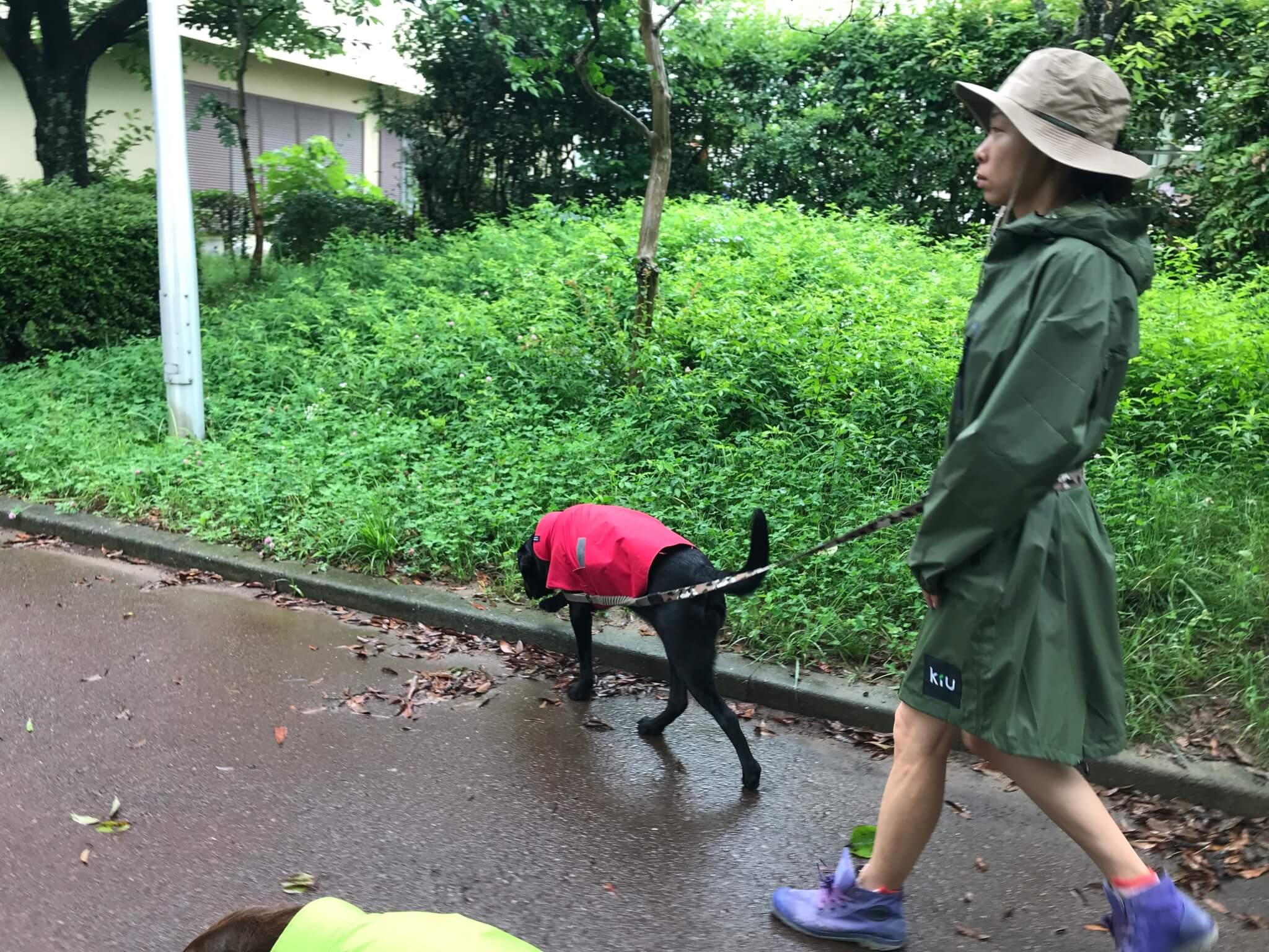 雨 ラブラドールレトリバー 散歩 レインコート kiu