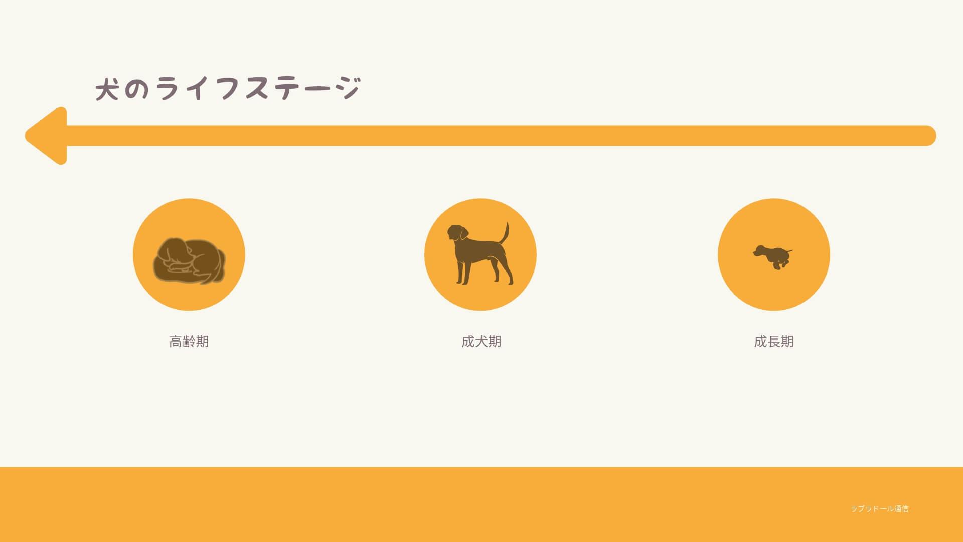 犬のライフステージ