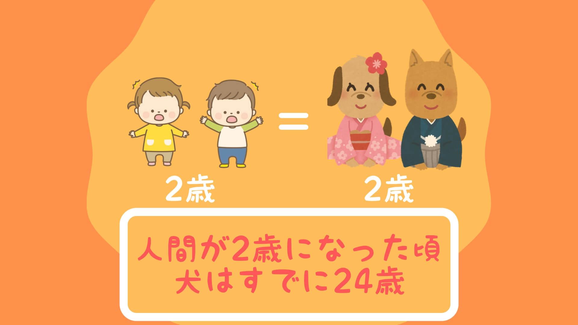 人間が2歳になった頃、犬はすでに24歳