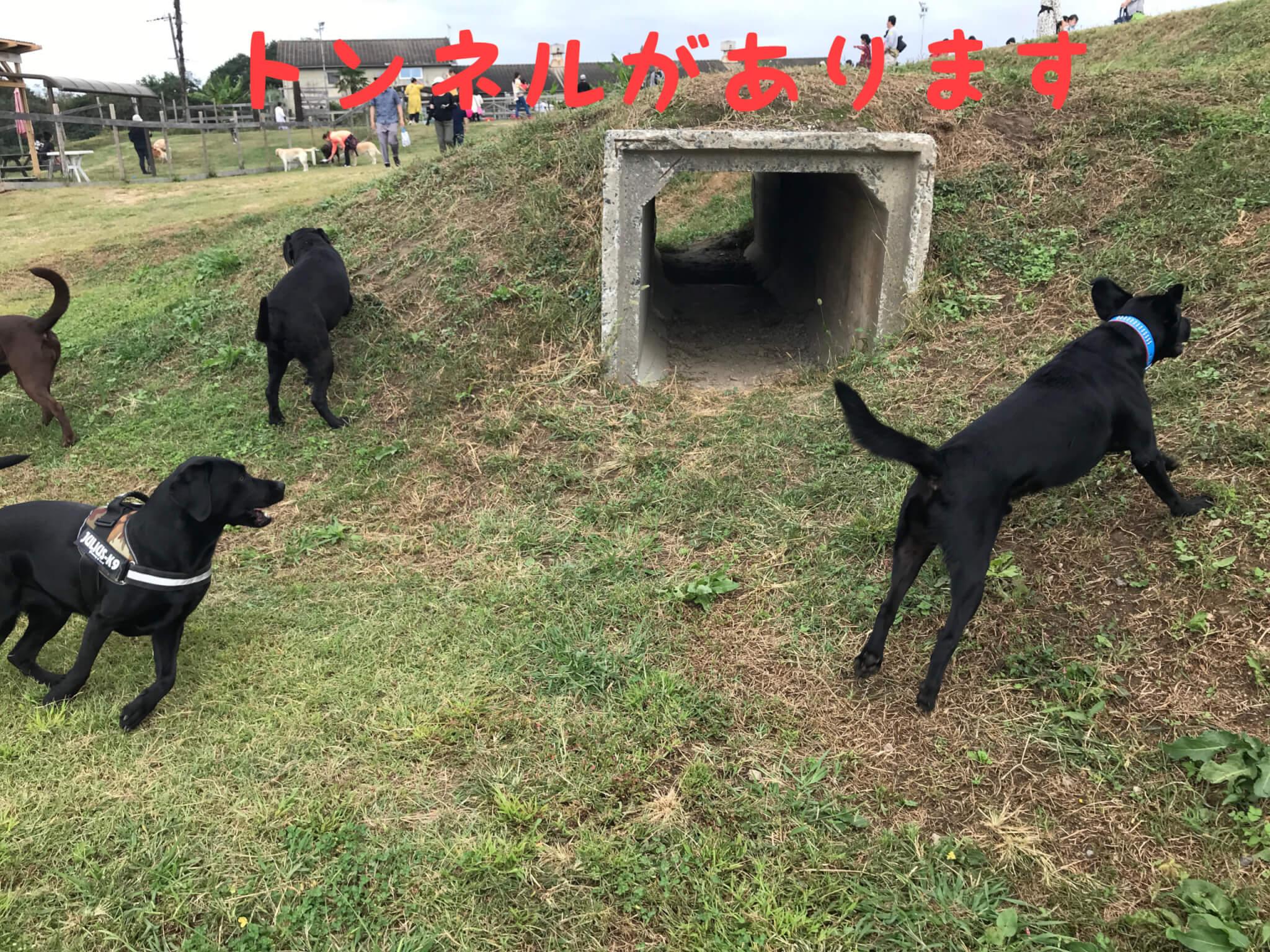 加西ドッグガーデン ドッグラン ラブラドールレトリバー トンネルがあります