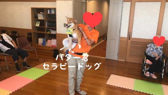 セラピードッグ バター 日本レスキュー協会