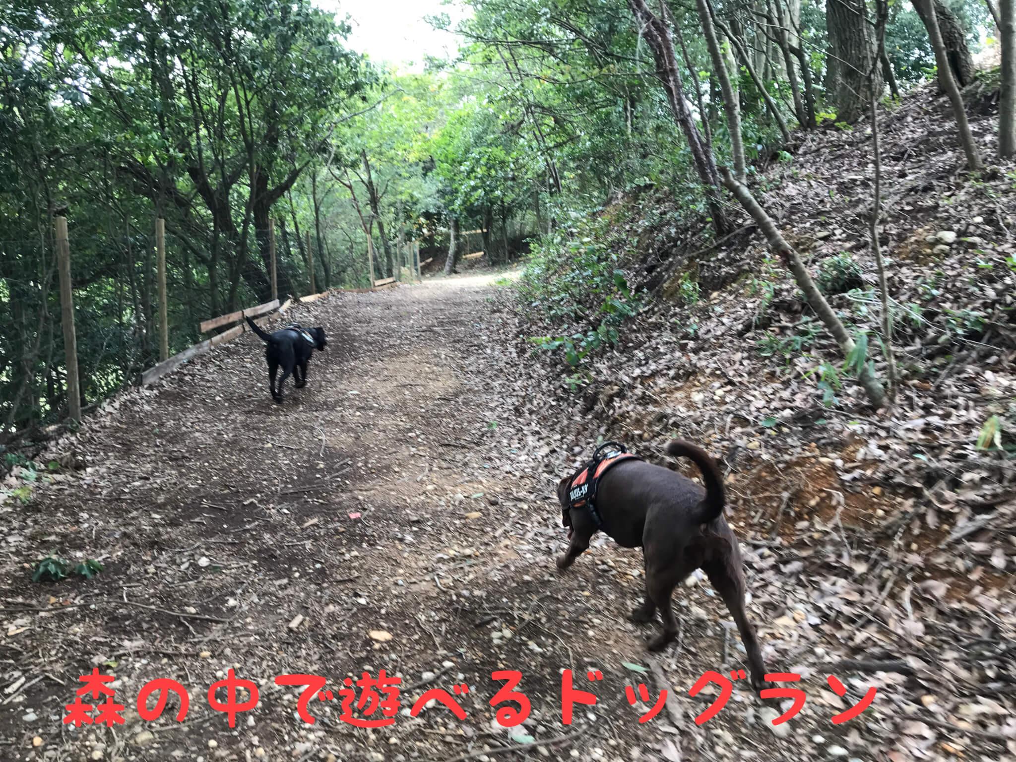森の中で遊べるドッグラン 加西ドッグガーデン
