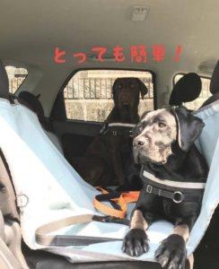 ペット用ドライブシート とっても簡単 ラブラドールレトリバー